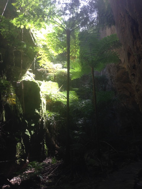150414 Carnavon Gorge - plants growing in the most impossible places
